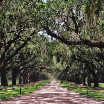 South Carolina. Boone Hall Plantation. Summer 2017.
